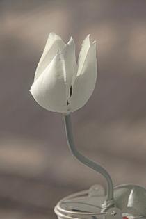 Tulpe von kiwar