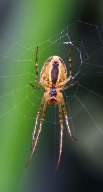 Spinne im Netz von Simone Marsig