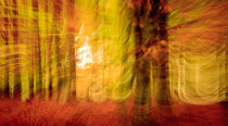 Triptych Autumn colours - Herbstfarben (1) by Silvia Eder