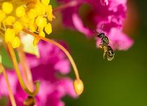 Flying-bee