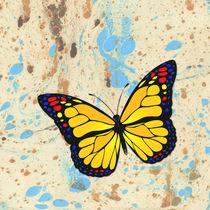 Yellow butterfly by Gaspar Avila