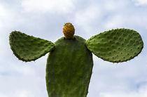 cactus by fotolos