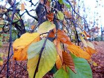 Herbst4-original-bearbeitet