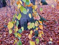 Herbst5-original-uberarbeitet