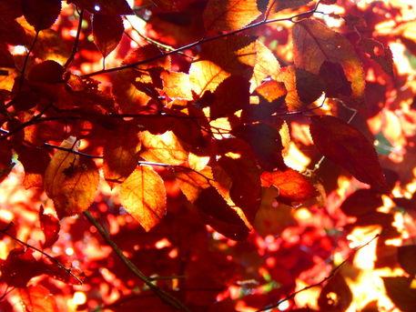 Herbst8-original