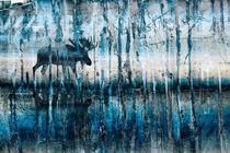 Moose-walk