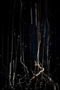Mangrove Snake von Adrian Hillman