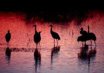 Cranes-1-original