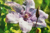 Clematis-dap-monet-revisited-neue-groesse