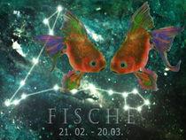 Am-jungstenfischezephirag