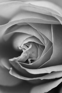 Rose cut black and white by er