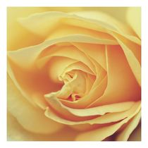 Rose 1 x 1 by er
