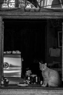 Katze-kiosk-valletta