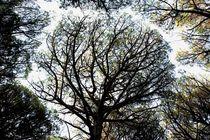 Mystic wood von malin