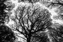 Mystic wood sw von malin