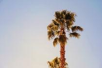 Green Palm Trees On Clear Blue Sky by Radu Bercan