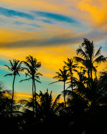 Tropical-scene-at-sunset-time