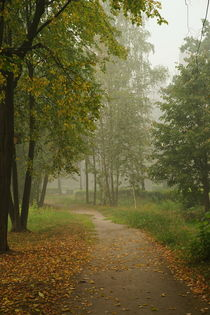 Foggy morning in park by Kirill Serkov