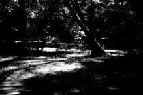 Lichteinfall ins Unterholz  by Bastian  Kienitz