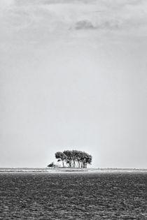 Bauminsel by kiwar
