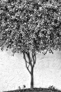 Tree by kiwar