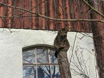 Katze  von Doris Baumann