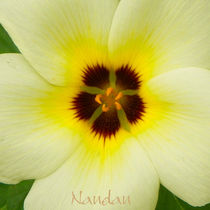 Flower-yellow-glow-closeup