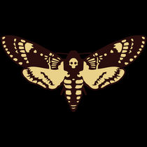butterfly skull by julien angebault