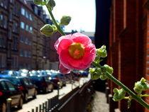 Stadtblume-bearbeitet