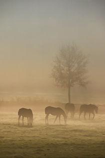 'Pferde im Nebel' by Bernhard Kaiser