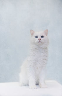 Dsc-8206-dot-snowy2t-10-16