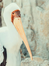 African Yellow Billed Stork Bird von Radu Bercan