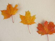 Bunte Ahornblätter im Herbst von Heike Rau
