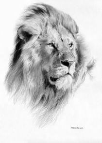 Lion von Fernando Ferreiro