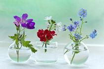 Blumen6905