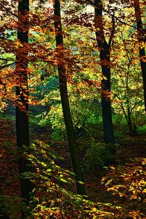 goldener Herbst von Kurt Wilhelm