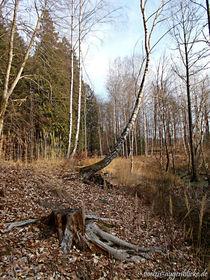 Waldwanderung-im-januar