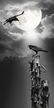 Raven at night under the moonlight by Monika Juengling