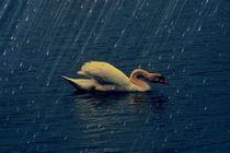Img-0404-nash-rain