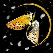 Schmetterlingmondfeder