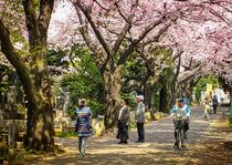Cherry blossom in Yanaka park by Erik Mugira