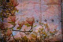 Metall - Magnolien von Claudia Evans