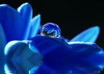 Blauer-tropfen
