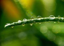 Wassertropfen-3
