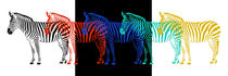Zebra Pop-Art-Parade by Monika Juengling