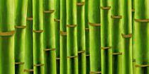 Bambus-fertig