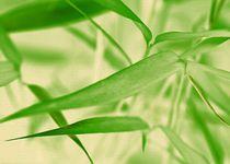 Bambus-i