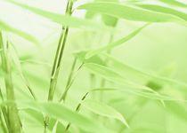Bambus-ii