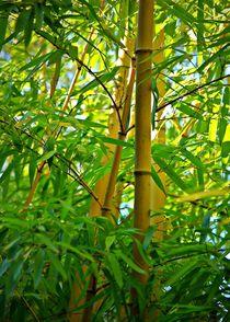 Bambusstabe