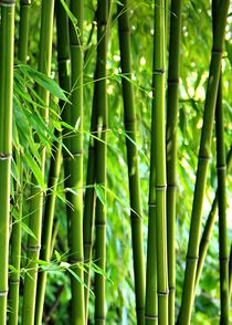 Bambushochformat